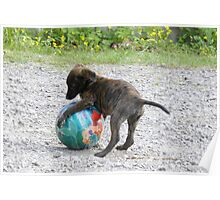 Baby Roxi and Ball !  Poster