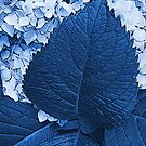 Blue as Blue by Zolton