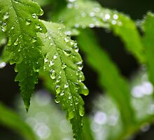 Drenched Fern Leaves by Christina Rollo