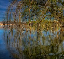 A Side Of Willow Please by Bob Larson