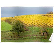 Glow of Fall Vines, Quessac Les Vignes Poster