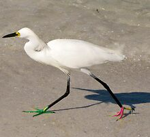 Snowy Egret - Red Green Morph by Frank Bibbins
