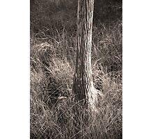Kirby Storter #1  Photographic Print