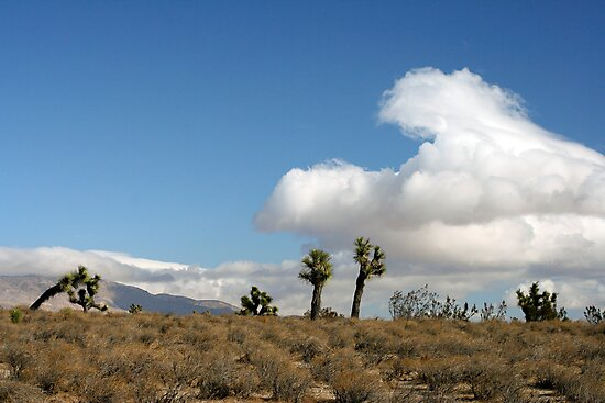 Oak Creek Canyon Road, Mojave, California by Chris Clarke