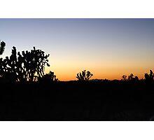 Cima Dome, Mojave National Preserve, California Photographic Print