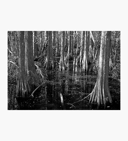 Cypress Photographic Print