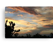 Cima Dome After Storm, Mojave National Preserve, California Canvas Print