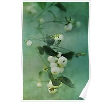 Snowberries Poster