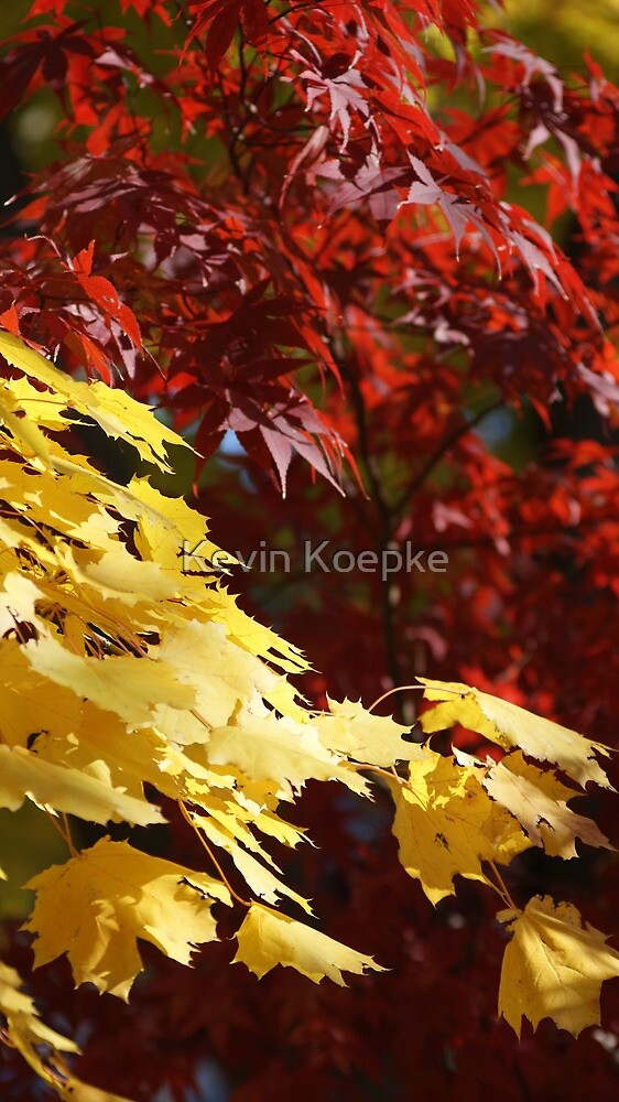 leaves of autumn by Kevin Koepke