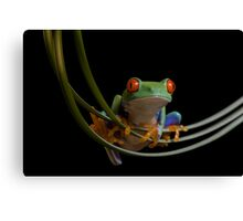 The frogs hammock Canvas Print