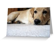 The Lab eyes Greeting Card
