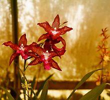 Orchids by Renee D. Miranda
