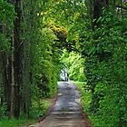 Driveway glade-Entrance to old winery,Orange NSW by mypic