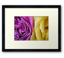 Complimentary colours Framed Print