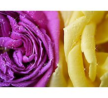 Complimentary colours Photographic Print