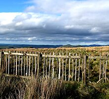 Fenced -in-English, Scottish border by mypic