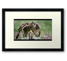 Imminent flight Framed Print
