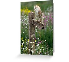 Barn owl at rest Greeting Card