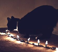 Black Cat with Fairy Lights by FatHobbit