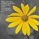 Wild Flower 3 by Jeff Ore