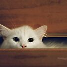 What's in Your Drawer? by ibjennyjenny