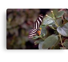 Heliconius Charithonius (Zebra Longwing) Butterfly Canvas Print