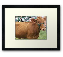 Why do I get picked on? Is it my fur? Framed Print