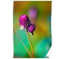 Purple blossoms against the autumn foliage Poster