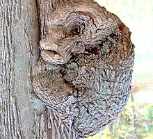 Amazing and Unusual Burl by John Butler