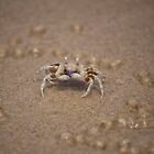 Crab on Mooloolaba Beach No. 1 by helenmentiplay