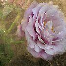 Mauve Rose by julie anne  grattan