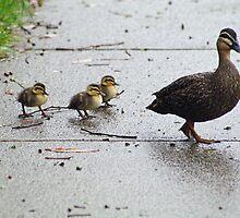 Ducks in a row by Lanii  Douglas