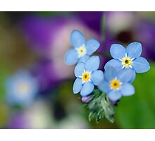 Blue Floral Mood Photographic Print