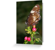 Great Eggfly - Hypolimnas bolina Greeting Card