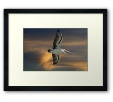 Soaring the Sunset Framed Print