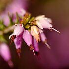 Floral Bells by jayneeldred