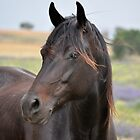 Black Beauty by julie anne  grattan
