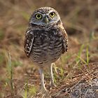 the little owl by kathy s gillentine