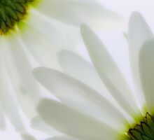 ...we touched like two petals brushing together and our lives began anew... by Geoffrey Dunn