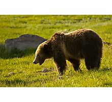 Grizzly Bear-Signed-#4535 Photographic Print
