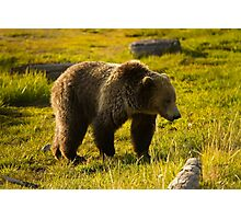 Grizzly Bear-Signed-#4477 Photographic Print