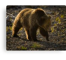Grizzly Bear-Signed-#4435 Canvas Print