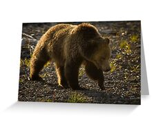 Grizzly Bear-Signed-#4435 Greeting Card