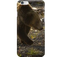 Grizzly Bear-Signed-#4429 iPhone Case/Skin