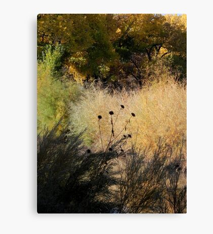 Bosque Brush Canvas Print