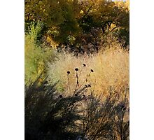 Bosque Brush Photographic Print