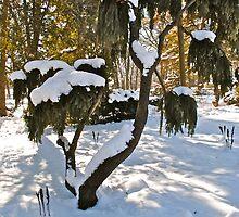 bonsai by Mark de Jong