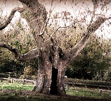Creepy Tree at Upton House by quaystockphoto