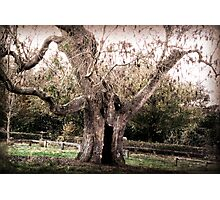 Creepy Tree at Upton House Photographic Print