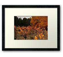 Auumn colours Minervois Vineyard France Framed Print